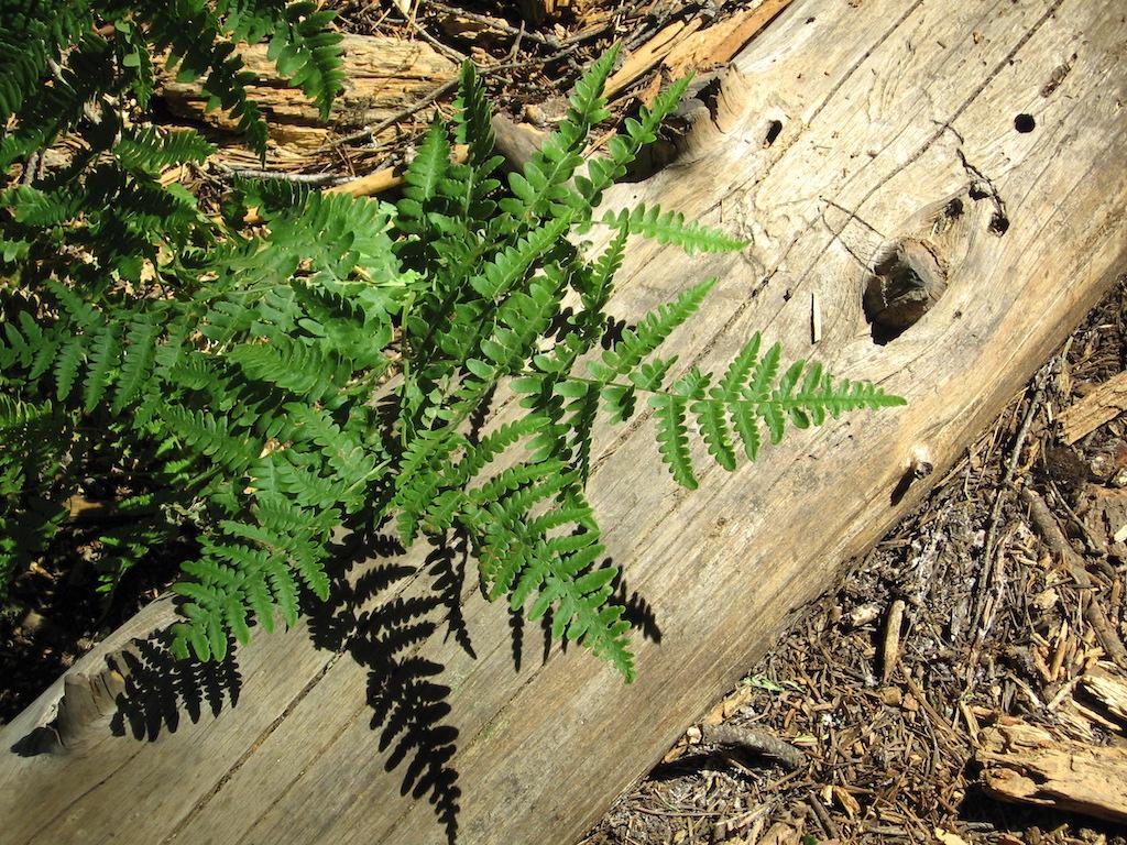 A sprig of fern near Crescent Meadow