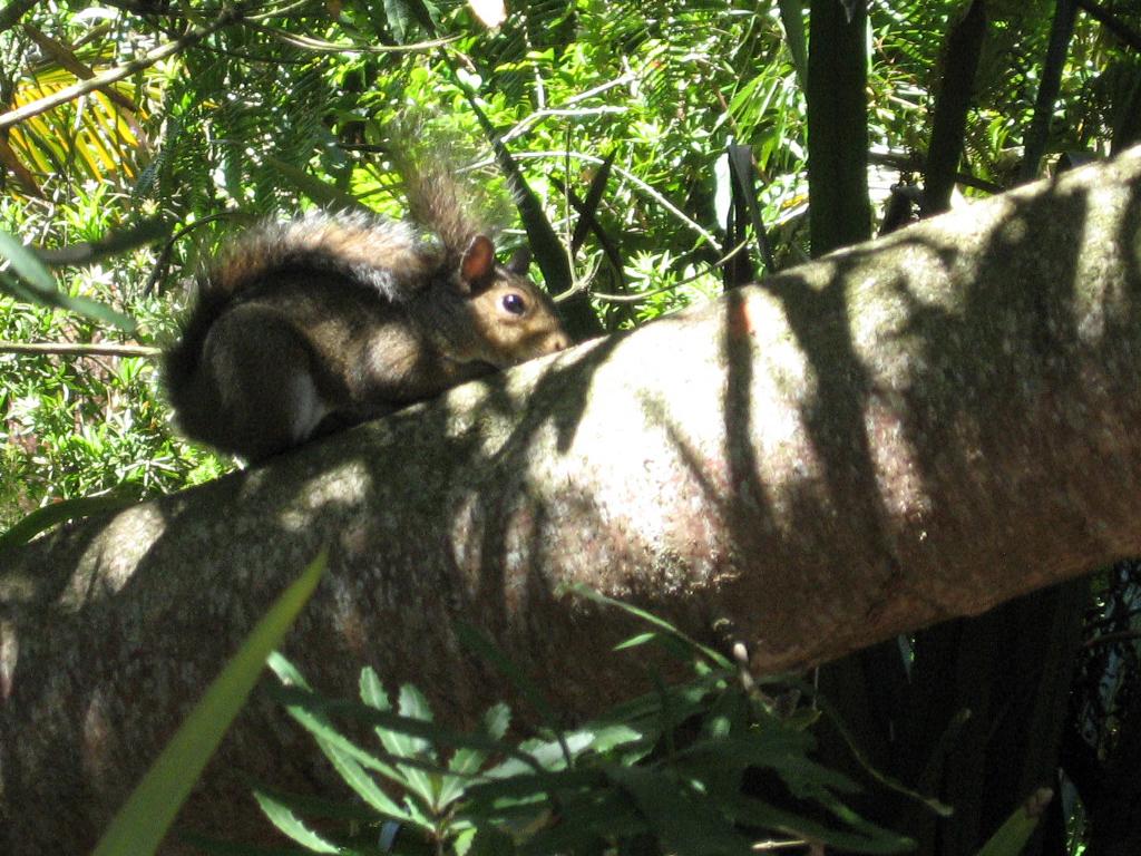 Squirrel at the San Francisco Botanic Garden