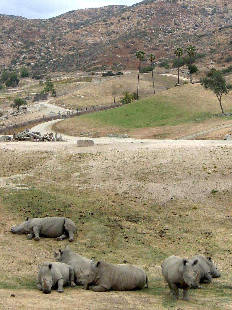 Rhinos at San Diego Zoo Safari Park