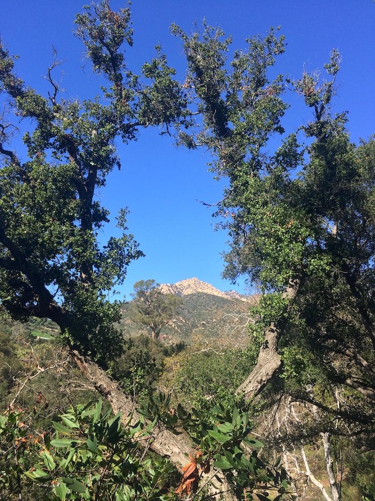 Cathedral Peak through coast live oaks