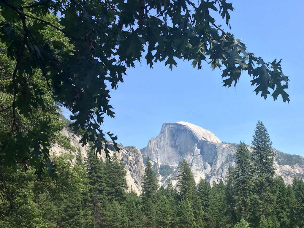 Half Dome from Cook