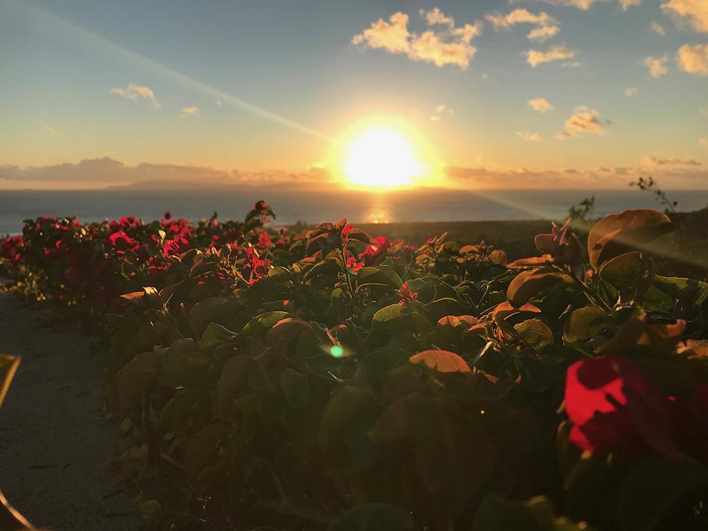 Sunset through bougainvillea at Grant Park